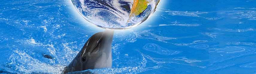 Sie sehen einen Delphin mit einer Weltkugel als Spielball!